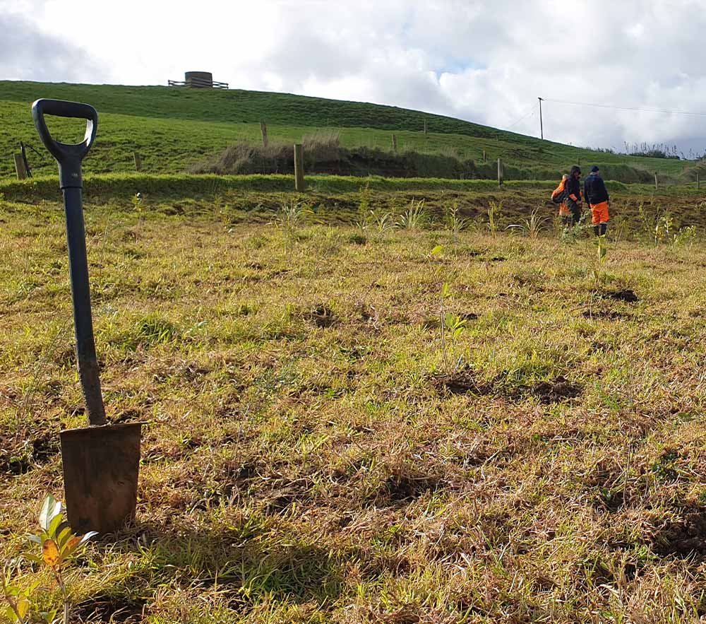 Riparian Planting Grants from Northland Regional Council